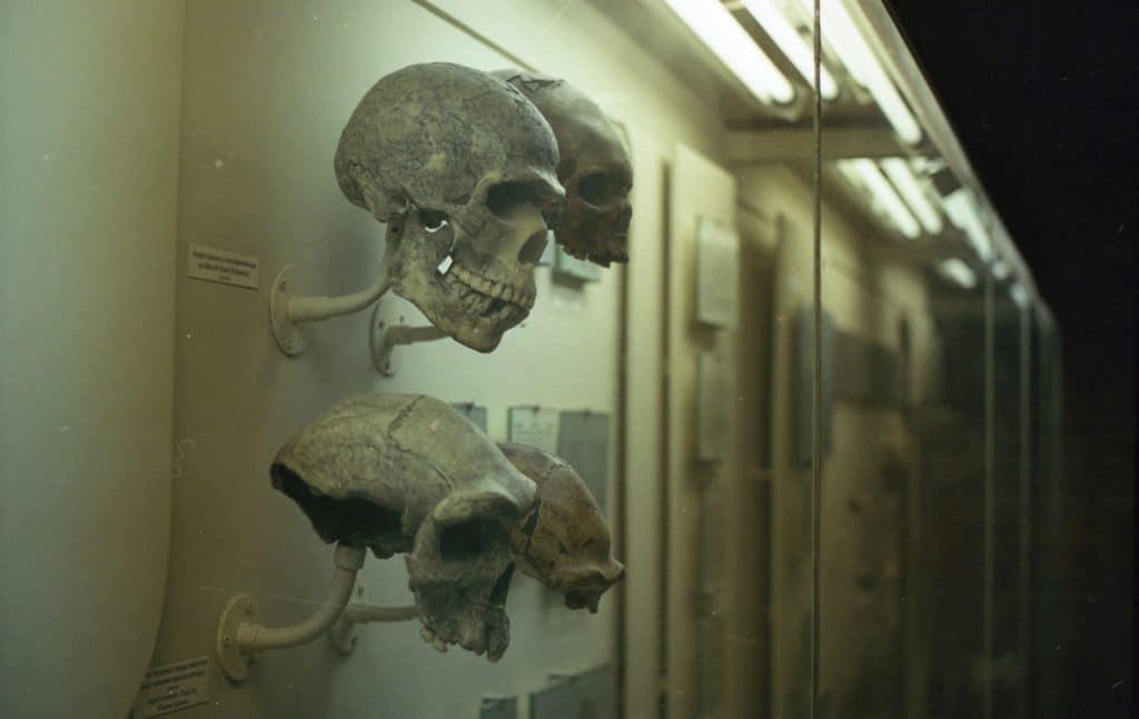 Osember Neandervolgyi Homo Sapiens Homo Neser Ramla