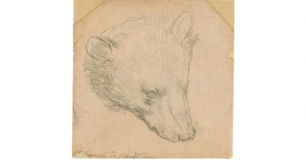 Leonardo Da Vinci Medvefej Rajz Arveres