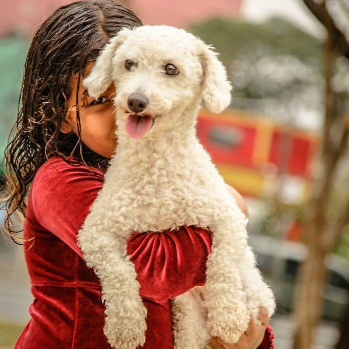 Brazil Hajlektalanok Kutyak 5