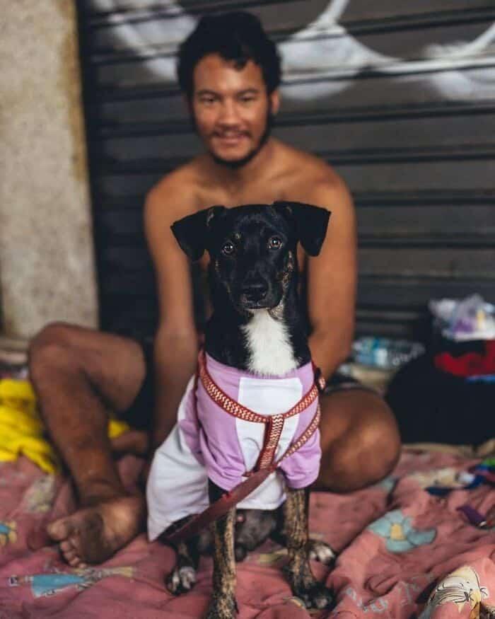 Brazil Hajlektalanok Kutyak 8
