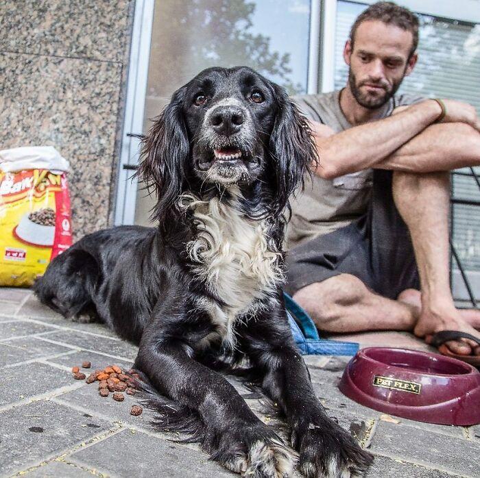 Brazil Hajlektalanok Kutyak 9